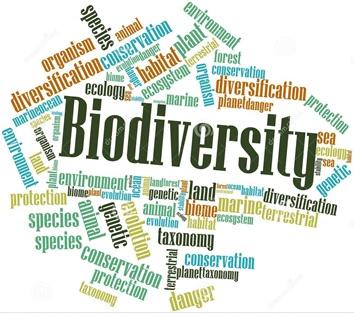 Integración del vector biodiversidad
